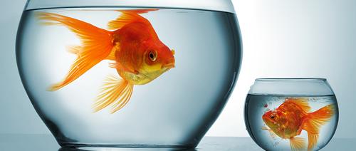 Tips Tingkatkan 'Conversion Rate' Pembeli Di Laman Web Jualan Anda.